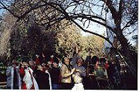 世界奇聞-天降奇蹟烈日當空無滴雨 木棉樹降香雨能聽話(2002 年1 月 28 日刊載於天天日報