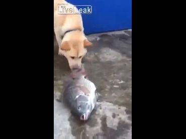 影片中的狗狗為了讓魚不會因為離開水而死亡,不斷地把水潑向魚。