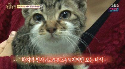 「媽咪真的死了」 看到最後一面小貓哭了