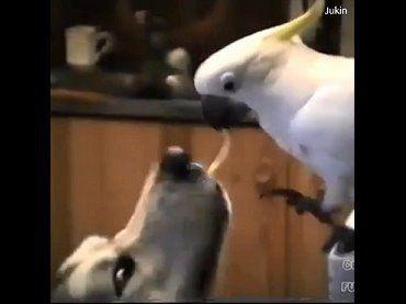 跨物種間的友愛