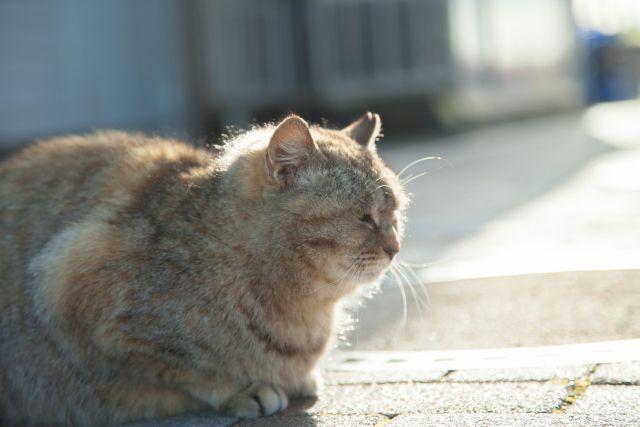 一隻流浪貓讓我後悔不已(華麗)