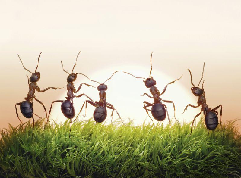 孩子們玩耍踩螞蟻,一個四歲男孩說了一句話令全場愕然(維梅、慧明)