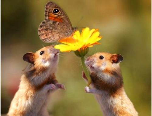 佛弟子與老鼠從互相傷害到友好相處,我過了戒殺護生這一關(Janie)