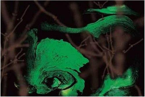 一隻美麗的大眼睛關注著世界——油畫《紫竹林中的香絲瓜》(陌上春)