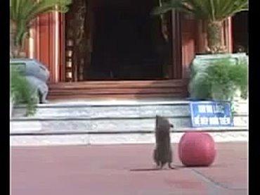 老鼠聼誦經 雙腳站立禮拜