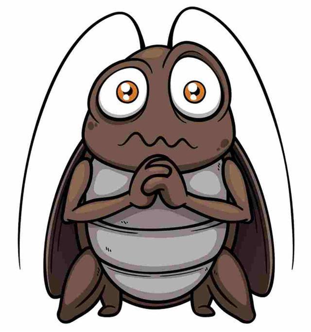 """蟑螂在新家""""落戶""""怎麼辦?這一招這麼靈,我怎麼沒想到?(瑤瑤、華梅)"""