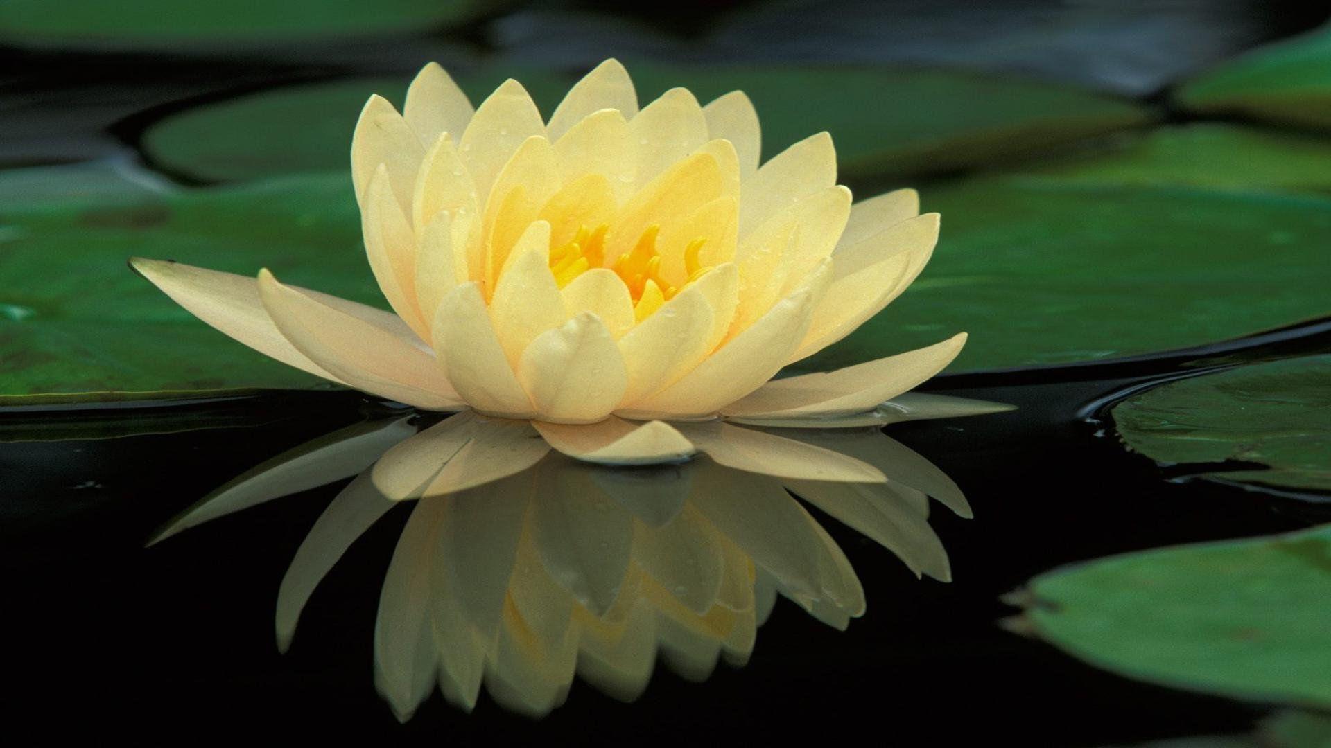 運頓多吉白菩提會-真誠的見證(木蘭)