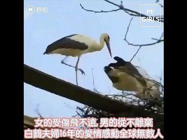 白鶴夫婦16年來的愛情感動全球無數人
