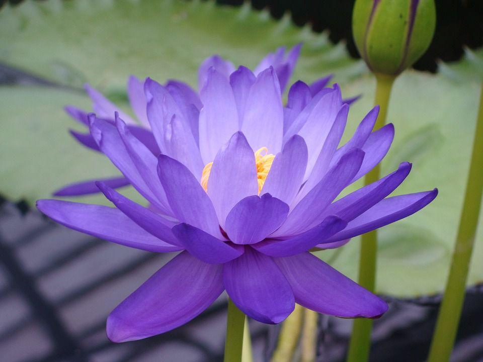 """華藏學佛苑-這個埃航空難倖存者手裡,拿了一支""""好人好報""""的花朵(在路上)"""