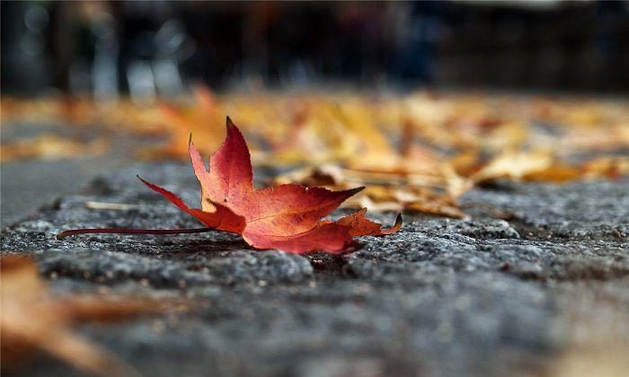 那一樹秋葉,一流雲煙,訴說著無常變幻(玖蕖思)