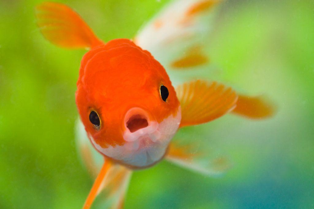 恭聞 H.H. 第三世多杰羌佛的法音之啟發—我不想過魚缸內的人生(智信)