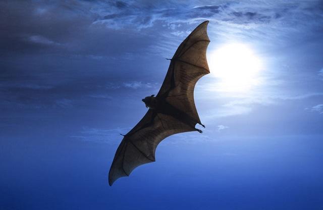 """蝙蝠、穿山甲、果子狸,究竟誰是""""新冠病毒""""的宿主?(合立)"""