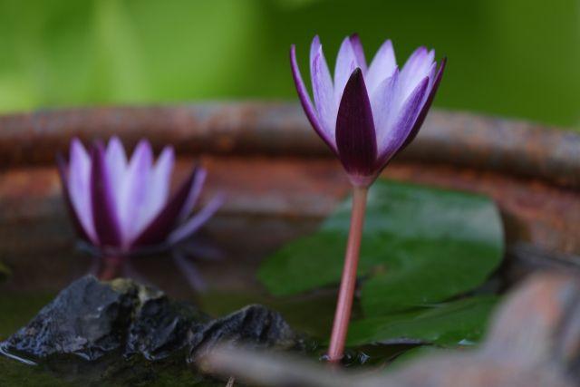中華國際佛教聞修正法會-千分之一(拉益格欣)
