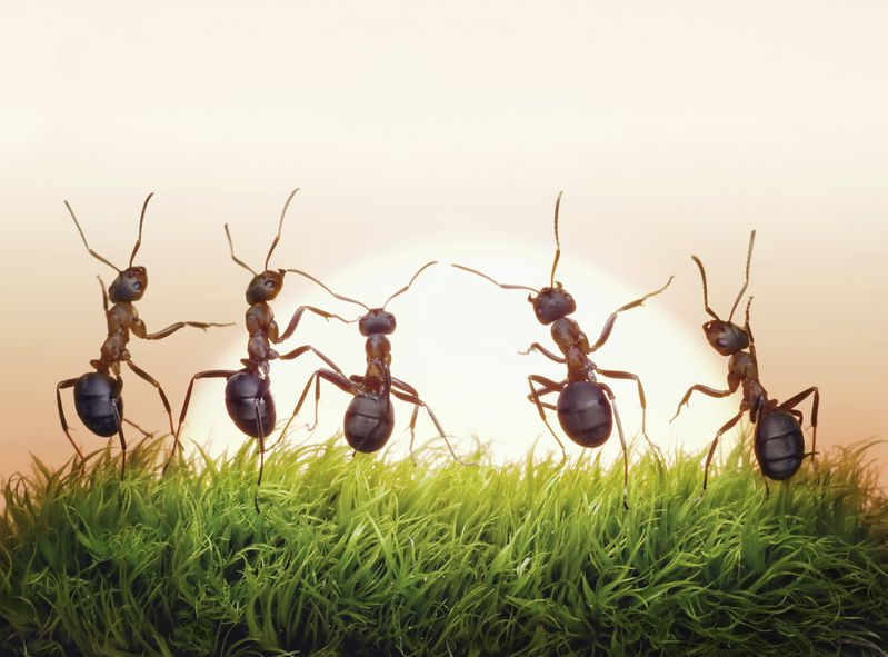小黃蟻啊,你們可找到了新家?(無聞)
