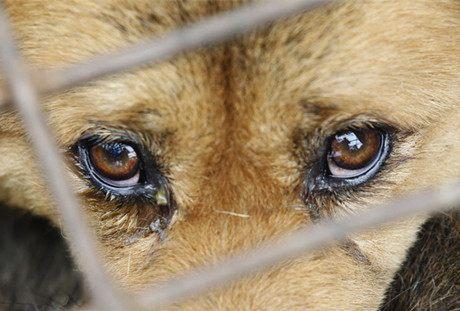 來自流浪動物的拷問:誰剝奪了我們的幸福?(葵心)