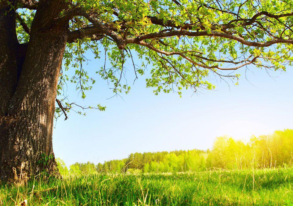 """悟在生活:從孔子同意""""一年三季""""荒唐說法中有悟(花開半夏)"""