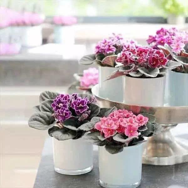 一顆充滿善意的心靈才是春天最美的花朵(太陽當空照、太陽花)