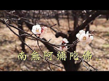 南無阿彌陀佛佛號唱誦-李娜(昌聖法師)