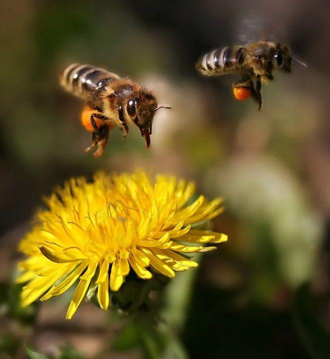 搗蜜蜂的一時甜頭,讓我追悔莫及(葵心)